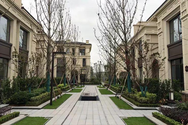 大间距的楼尺度与银杏树阵戒指标志设计图片